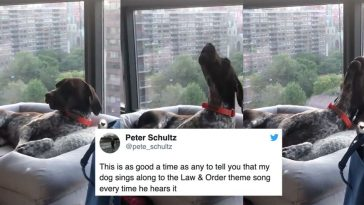 Please enjoy these dogs singing along to the 'Law & Order' theme song