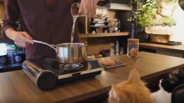 Watch him make an awesome Japanese meal for his cats